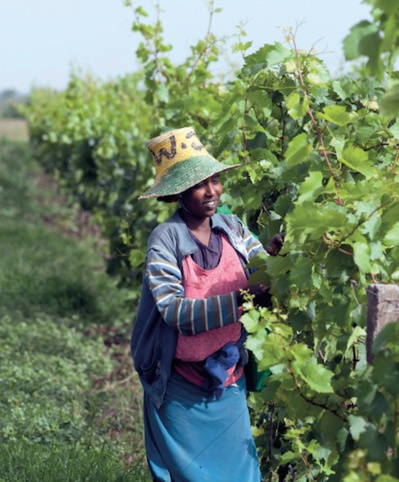 L'éveil viticole africain
